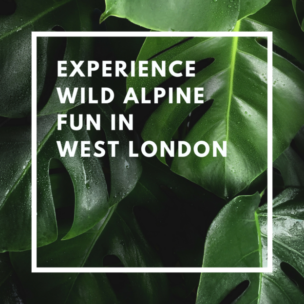 experience wild alpine fun in west london